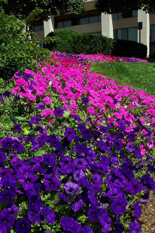 Attrayant Living Colour Landscaping 4 1